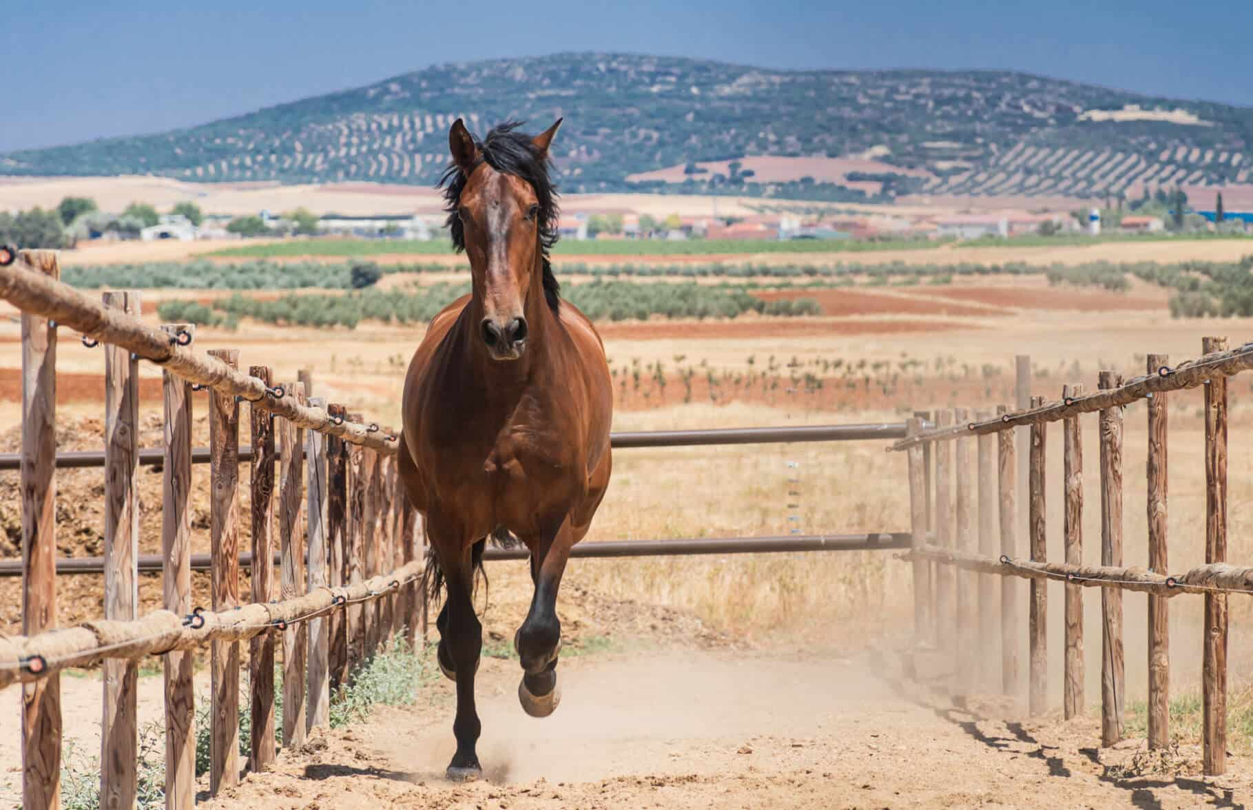 Experience with horses in Spain